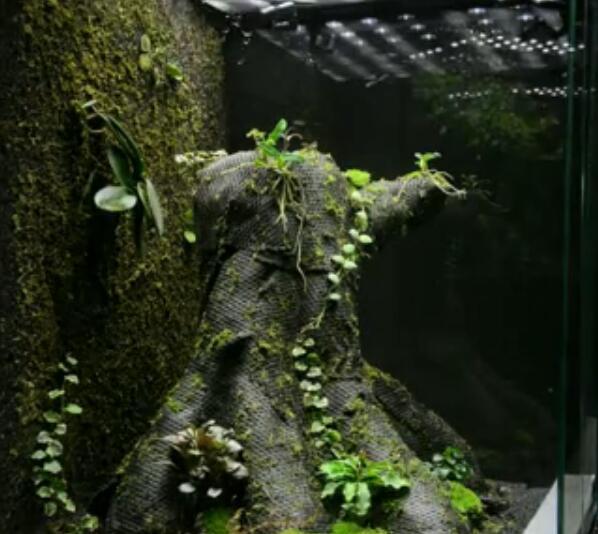 GREENDEEP格林德 苔纤 新世代植物附生植材